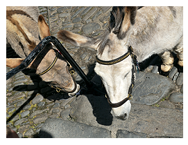 clovelClovelly Donkeys
