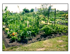 Plot Twenty - Tricks Allotments